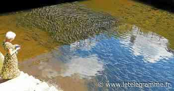 Les mulets dans l'Odet, la perpétuelle attraction à Quimper [Vidéo] - Le Télégramme