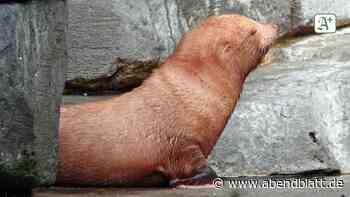 Hamburg: Hagenbeck-Seebärenbaby soll nach Disney-Figur benannt werden