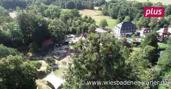 Büro in den Wiesbadener Baumwipfeln