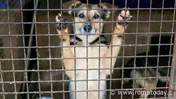 Adottare un cane dal canile: i falsi miti da sfatare