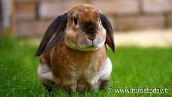 Le tipologie di coniglio: razze, caratteristiche e linguaggio