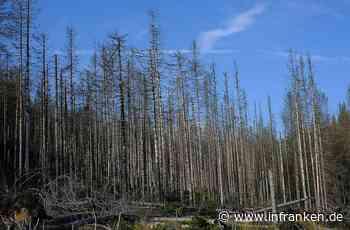 Waldsterben fängt gerade erst an: Würzburger Forscher warnt vor drastischen Folgen des Klimawandels