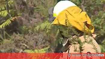 Cinco meios aéreos e mais de 100 bombeiros combatem incêndio em Leiria - Correio da Manhã