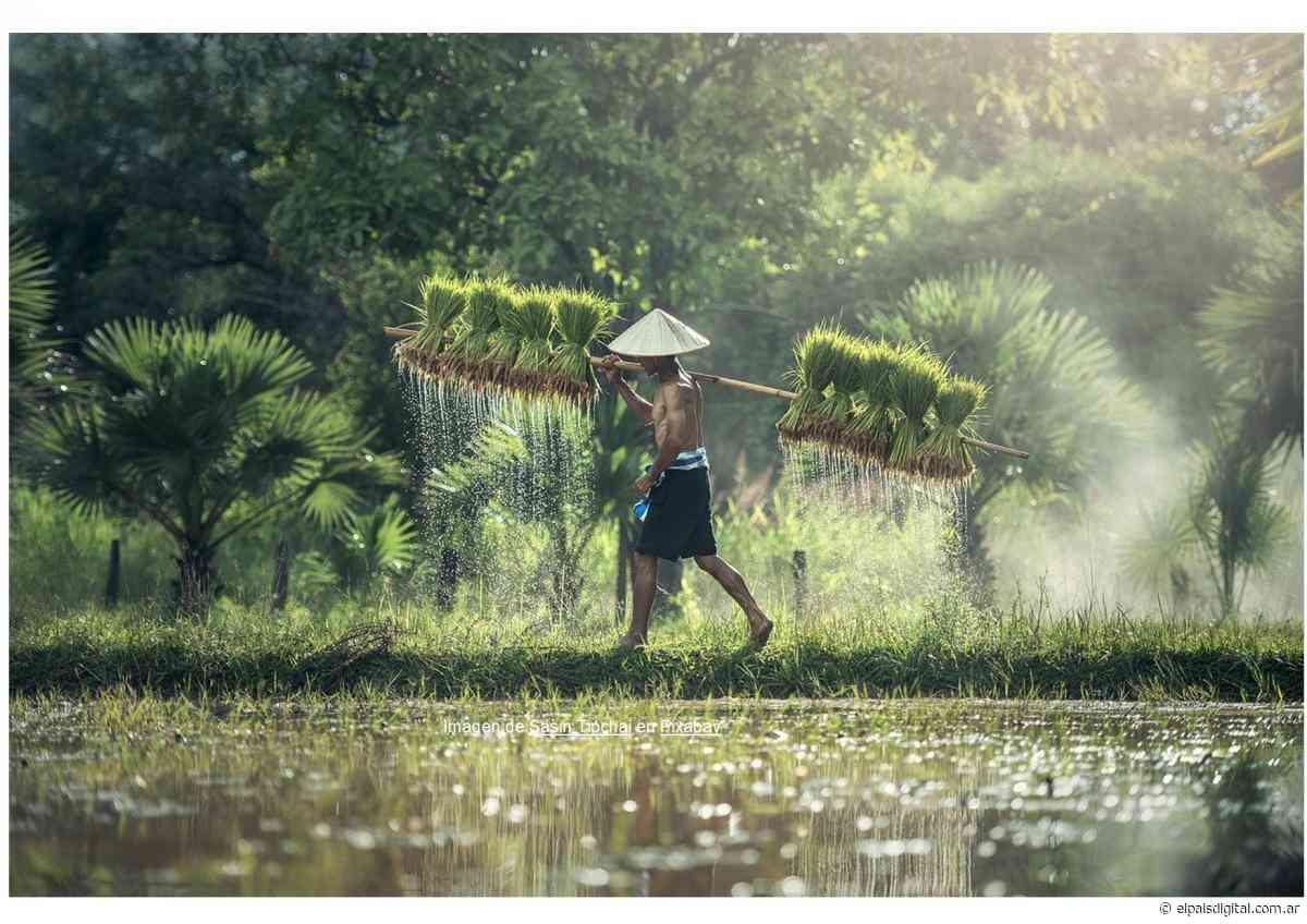 El progreso de Tailandia visto desde Patani - elpaisdigital.com.ar
