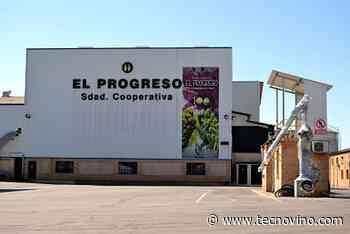 Buenas perspectivas de vendimia en El Progreso y Vidasol - Tecnovino.com