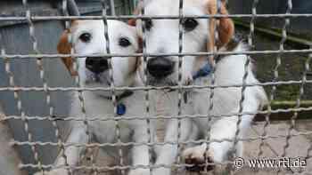 Linke: Corona-Krise hat Lage der Tierheime verschlechtert - RTL Online
