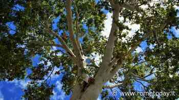 Alberi, la Regione vuole piantarne sei milioni: riparte il progetto Ossigeno