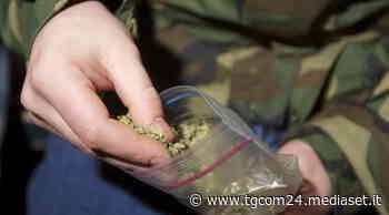 Gioia Tauro, scoperto essiccatoio con migliaia di piante di marijuana - TGCOM