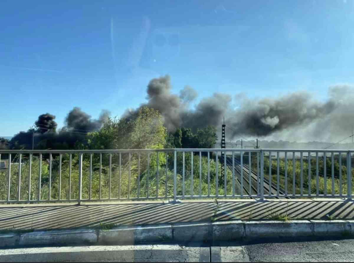 MARSEILLAN - Un violent incendie se déclenche du coté de Maldormir - Hérault-Tribune