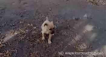 Torre Annunziata - Cucciolo trovato tra i rifiuti dell'ex Santa Lucia, cerca adozione - TorreSette