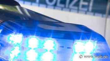 Polizei stoppt mit riesiger Palme beladenen Pkw in Saarlouis - DIE WELT