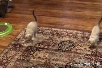Video zeigt, wie zwei Katzen absolut synchron tanzen - TAG24