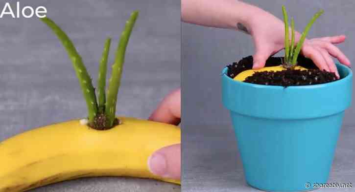 15 Wild gardening hacks that will help your plants grow faster and healthier