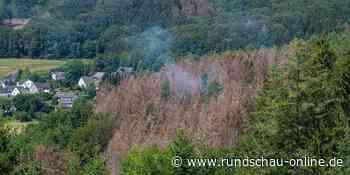 Ursache noch unklar: Kleinerer Waldbrand in Gummersbach gelöscht - Kölnische Rundschau