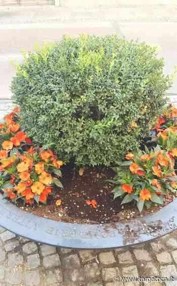 Bra, dopo il cimitero, fiori presi di mira anche in una fioriera del centro. Portati via piantini di balsamina - TargatoCn.it