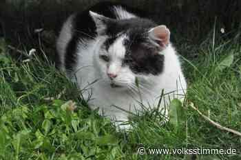Gardelegen: Leid und Elend der Straßenkatzen - Volksstimme