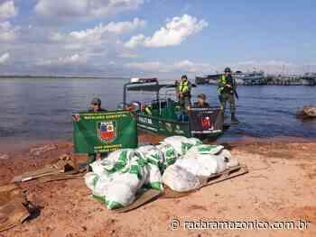 Duas toneladas de pirarucu são apreendidas em Manacapuru - radar amazonico