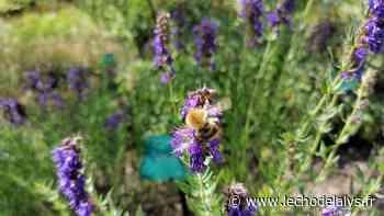 Profiter de l'été pour découvrir le conservatoire botanique à Bailleul - L'Écho de la Lys