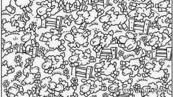 Acertijo visual: ¿Eres capaz de encontrar el pollo entre las ovejas? - MDZ Online