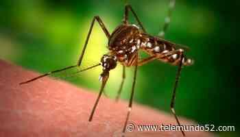 Detectan virus del Nilo Occidental en el Valle de San Gabriel - Telemundo 52