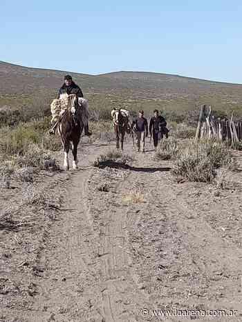 Son encargados de un campo y le robaron 15 ovejas al vecino - La Pampa La Arena
