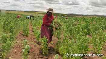 Puno: Política agraria del país debe ser reformulada - Radio Onda Azul