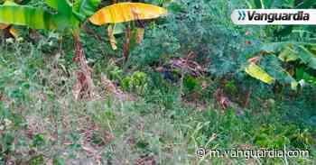 Joven fue asesinado en zona rural de San Vicente de Chucurí, Santander - Vanguardia