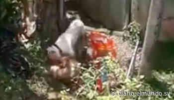 Vecinos de colonia en Cuscatancingo piden ayuda al MAG para controlar a perro violento - Diario El Mundo