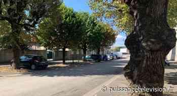 Saint-Dizier : Les arbres de la rue Louis Ortiz font toujours débat - Puissance Télévision