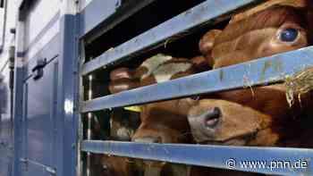 Verdachts der Beihilfe zur Tierquälerei: Ermittlungen gegen Veterinäramt-Mitarbeiter in Brandenburg - Brandenburg - Startseite - Potsdamer Neueste Nachrichten