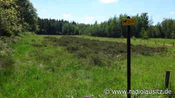 Freilaufende Hunde bedrohen Artenvielfalt im Hartmannsdorfer Forst - Radio Lausitz