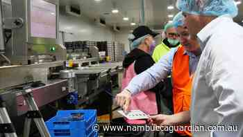 Coffs Harbour blueberry packing house now up with the best in Australia | Guardian News | Nambucca Heads, NSW - Nambucca Guardian News
