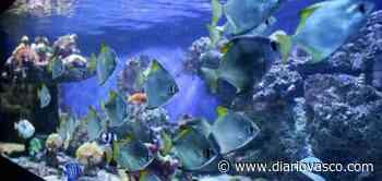 El Aquarium de San Sebastián suma en julio 26.556 visitas, el 60% de las que registró hace un año - Diario Vasco
