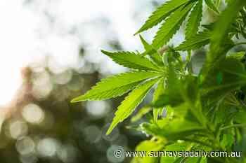 $400,000 Mildura cannabis crop mystery for police - Sunraysia Daily