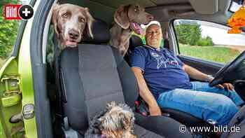Erfurt: Bauarbeiter wohnt mit seinen drei Hunde im Auto - BILD