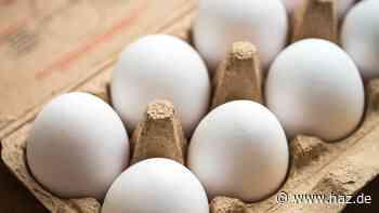 Umweltkontaminierung: Eier aus Freilandhaltung zurückgerufen