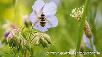 So will die Regierung gegen Insektensterben vorgehen