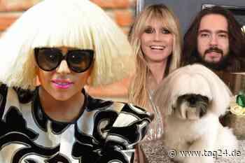 Lady Gaga, Heidi Klum, Gandalf: Dieser Hund sieht aus wie so mancher Star - TAG24