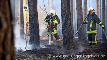 Waldbrandgefahr steigt weiter: Bereits etliche Feuer, Entspannung nicht in Sicht