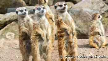 Schweriner Zoo fehlen Hunderttausende Euro in der Kasse - Süddeutsche Zeitung