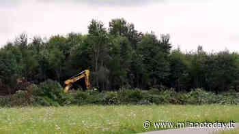 Vasca di laminazione a Bresso, inizia tra le proteste il taglio degli alberi al Parco Nord di Milano - MilanoToday