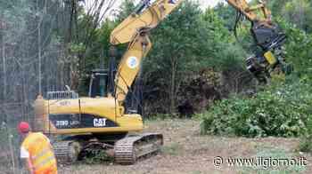 Bresso, partiti i lavori per la vasca: strage di alberi - IL GIORNO