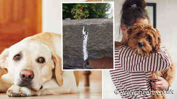 Dog owners issued warning as bizarre white chalk marks outside homes are linked to dog thefts - Heart