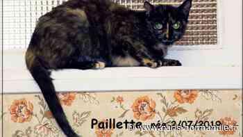 L'École du chat de Saint-Aubin-lès-Elbeuf cherche une famille d'accueil - Paris-Normandie