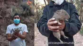 ▷ Auxilian a animales silvestres que escaparon de incendio forestal en Cusco | LRSD | Sociedad - Noticias Peru - Noticias por el Mundo