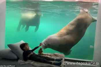 Im Belgischen Pairi Daiza-Zoo schlafen Gäste direkt bei den Tieren - TAGESKARTE
