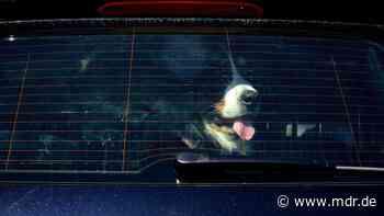 Zeuge von Tierquälerei? So helfen Sie den Tieren - MDR