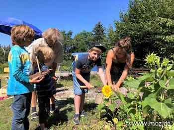 Feriencamp: Sommerprojekt im Naturschutzcamp Neuenhagen - Märkische Onlinezeitung