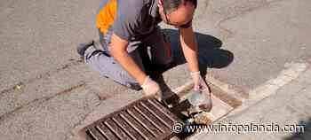 Altura inicia actuaciones contra el mosquito tigre | InfoPalancia - infopalancia.com