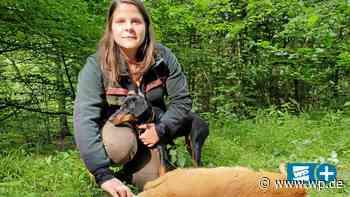 Kreuztal: Freilaufender Hund reißt Reh im Kredenbacher Wald - Westfalenpost
